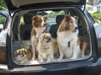 Moving With Pets Car